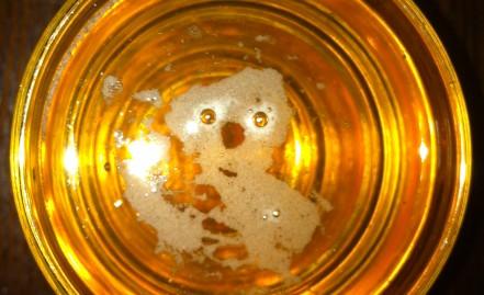 I found a koala in my beer